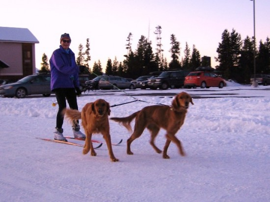 Rob from Salt Lake takes his dogs for a ski.  Or is it the other way around?