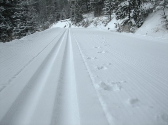 Loggers Trail - Bohard Ranch